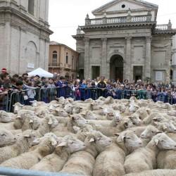 Lanciano, Piazza Plebiscito. immagine della VII edizione Tratturo Magno, 4 ottobre 2013